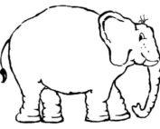 Unser Proktologie Praxis Frankfurt Elefant