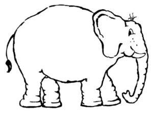 Unser Proktologiepraxis Frankfurt Elefant